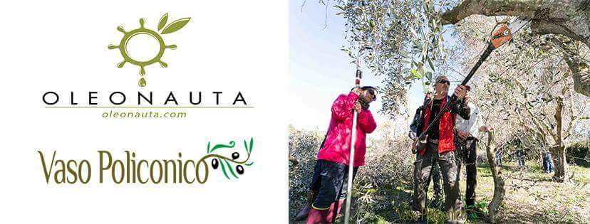 Corso di potatura professionale dell'olivo
